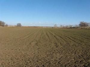 Field-A