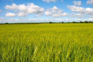 fields-of-grain-sean-mcclay